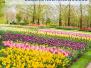2021-05-07: wiosenne kwiaty