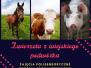 2021-05-28: zwierzeta z wiejskiego podworka